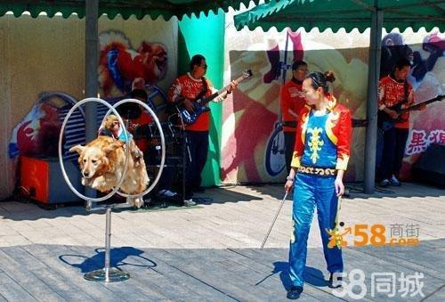 马戏团动物表演—58商家店铺